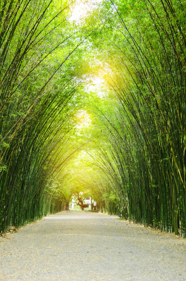 Tunnel bamboo trees. Tunnel bamboo trees and walkway stock image