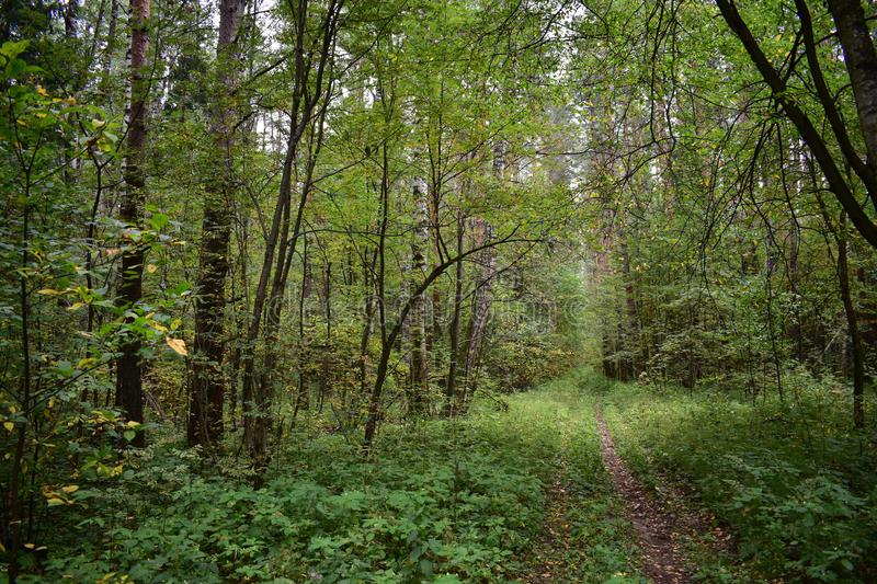 Tunnel of branches of deciduous trees above the forest path, the way to the picturesque stock photos