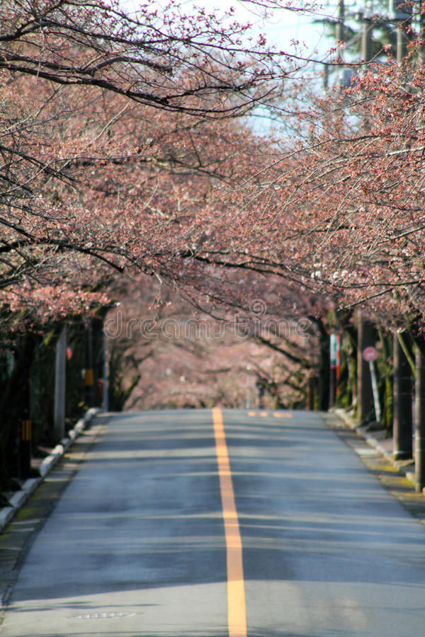 Tunnel of cherry blossom in Izu highland royalty free stock photos