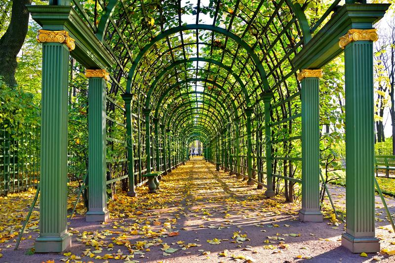 Tunnel of climbing plants in the Summer Garden in autumn on a Sunny day. St. Petersburg stock photos