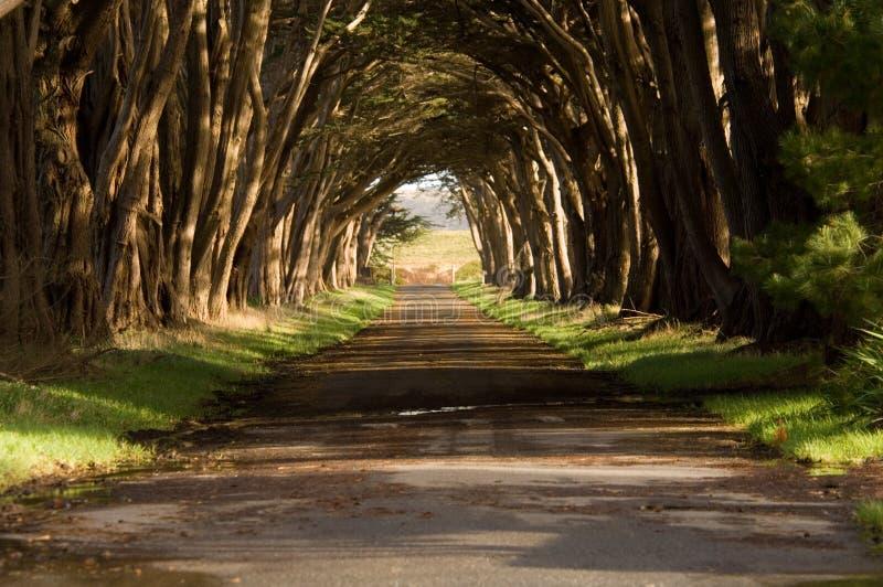 Tunnel d'arbre de Cypress image libre de droits
