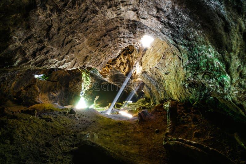 Tunnel d'arbre de séquoia géant photographie stock