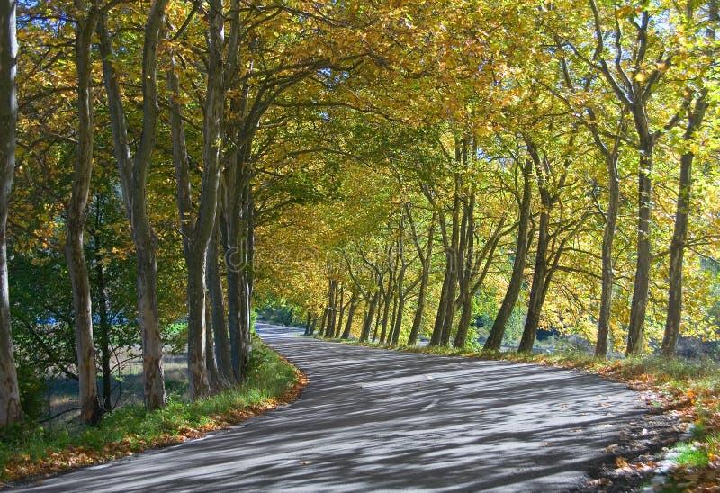Tunnel d'automne des arbres - courbure de route photos libres de droits