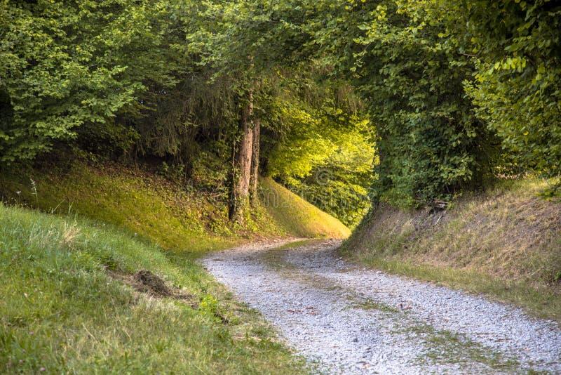Tunnel de feuillage dans la route rurale non pav?e photos stock