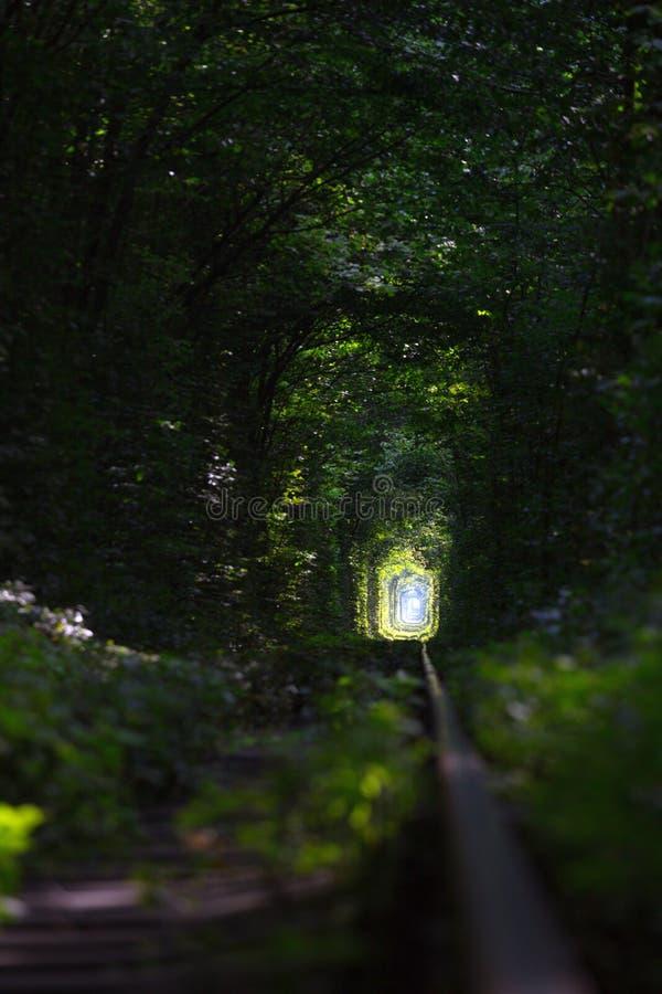 Tunnel de l'amour chez l'Ukraine photographie stock libre de droits