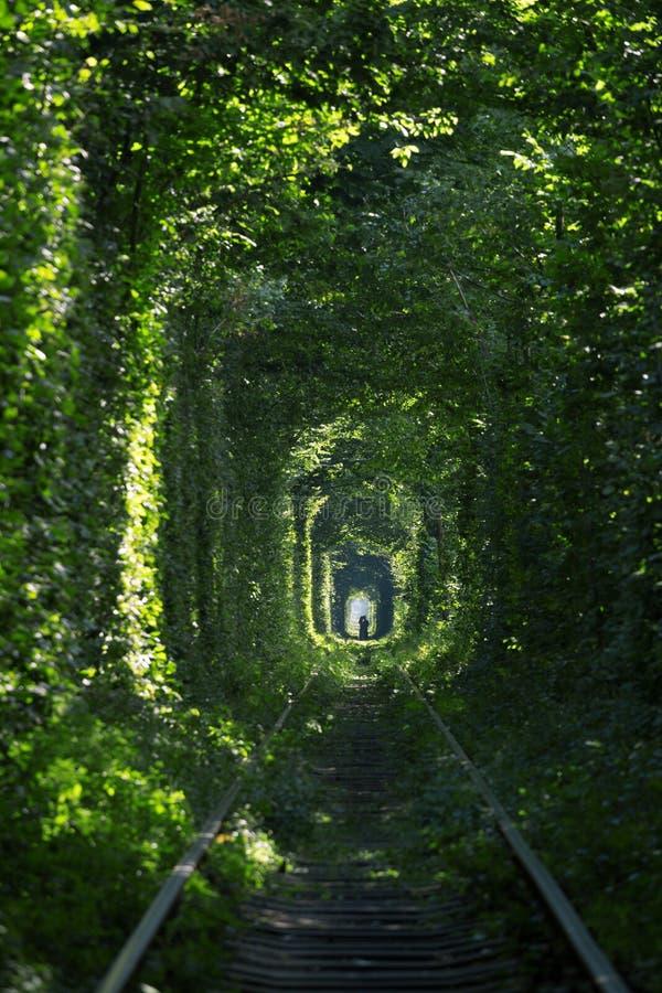 Tunnel de l'amour chez l'Ukraine photo libre de droits