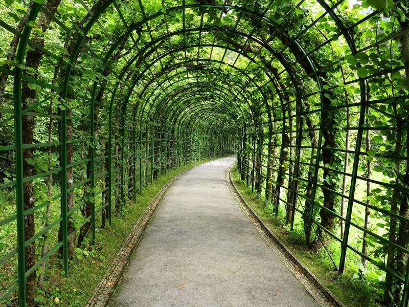 Tunnel de pergola de tilleul photos libres de droits