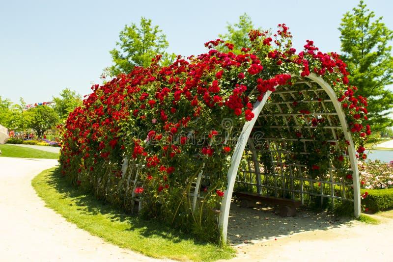 Tunnel de roses photos stock