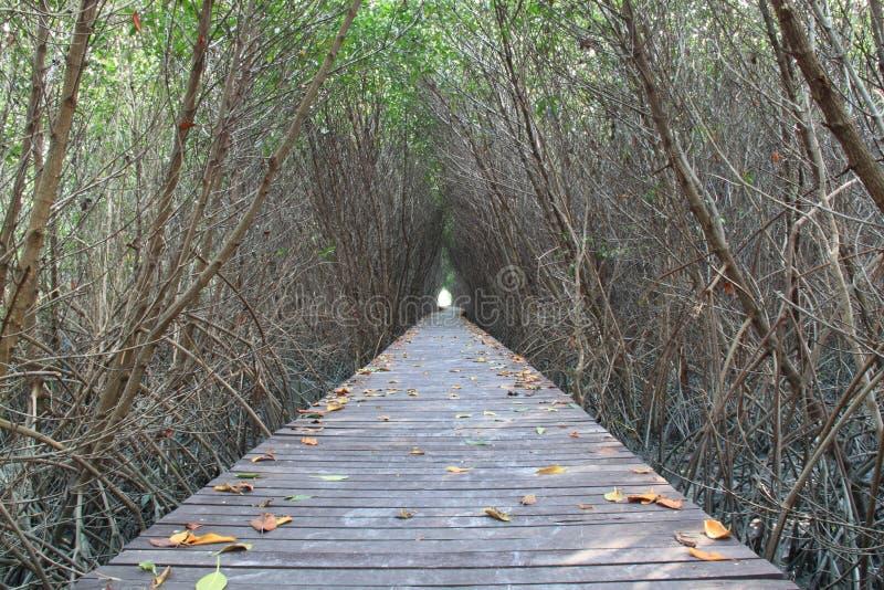 Tunnel degli alberi fotografia stock libera da diritti