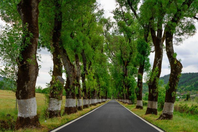 Tunnel degli alberi in strada tipica nell'Alentejo fotografie stock libere da diritti