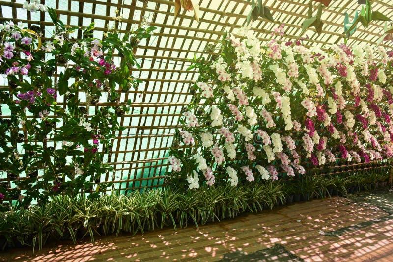 Tunnel del fiore fotografie stock libere da diritti
