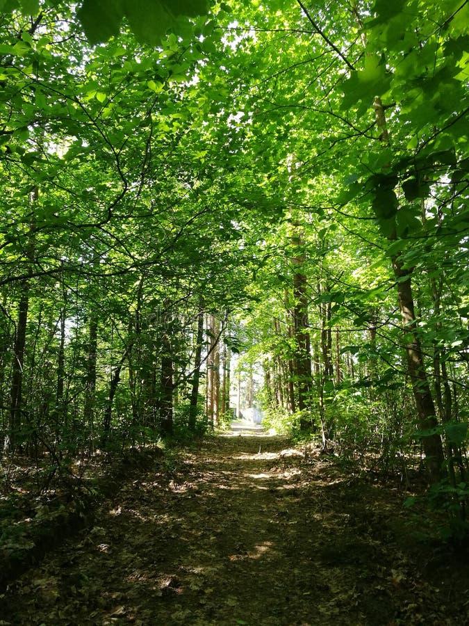 Tunnel dell'albero fotografie stock libere da diritti
