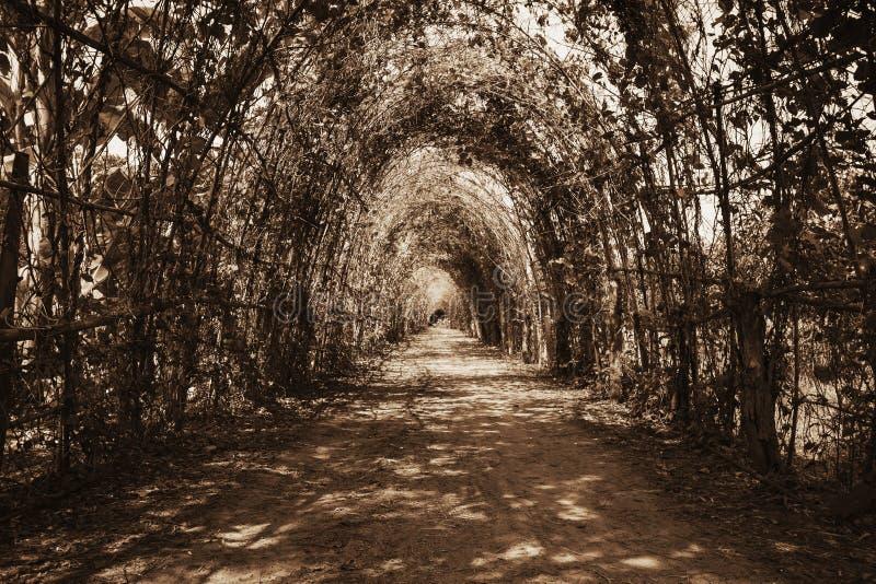 Tunnel dell'albero immagini stock