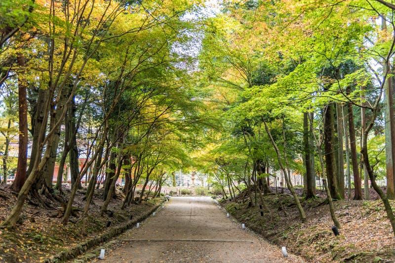 Tunnel dell'albero che consiste degli alberi di acero lungo un percorso in una foresta Kyoto, Giappone di autunno immagini stock libere da diritti