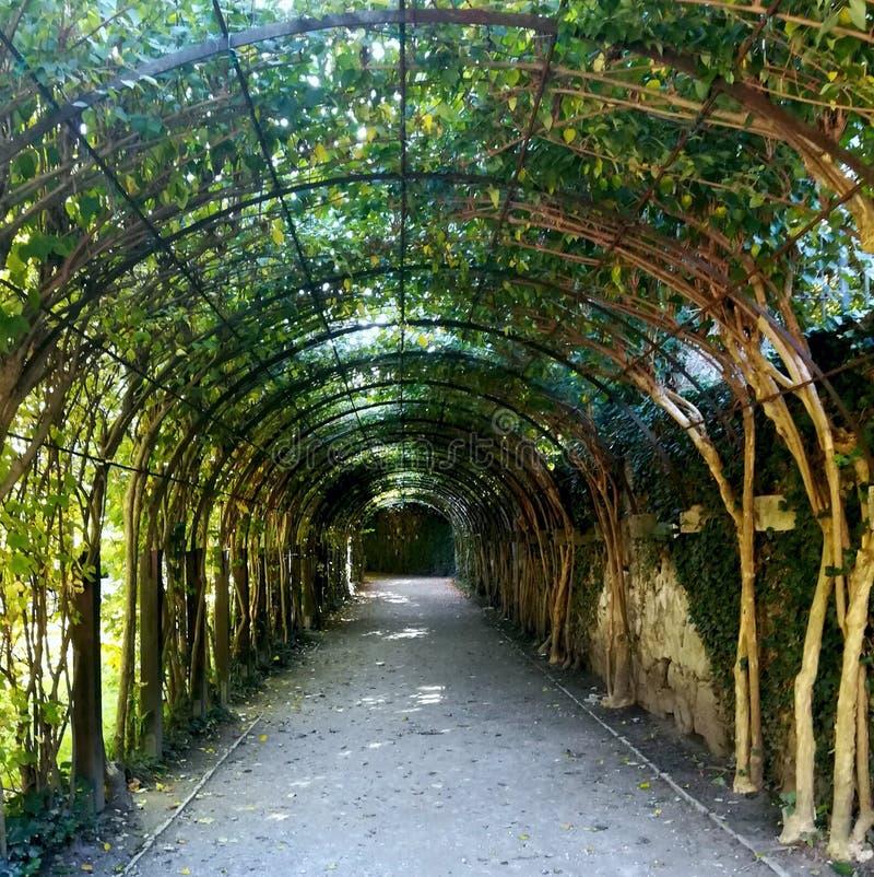 Tunnel dell'albero in un giardino di Salisburgo fotografie stock libere da diritti