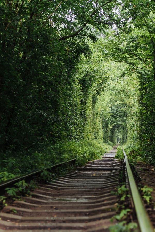Tunnel dell'amore naturale che emerge dagli alberi fotografia stock