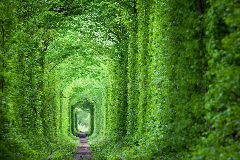 Tunnel dell'amore reale fantastico, alberi verdi e la ferrovia fotografia stock libera da diritti