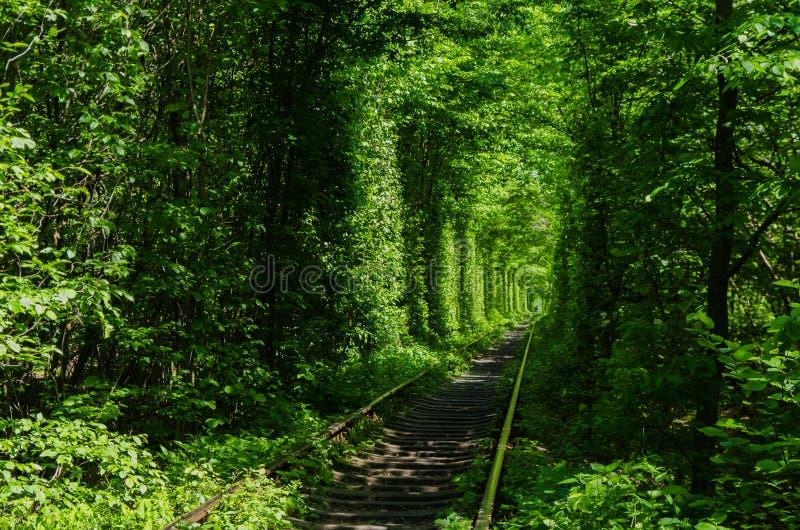 Tunnel dell'amore verde fatto senza aiuto umano Klevan, Ucraina immagini stock libere da diritti