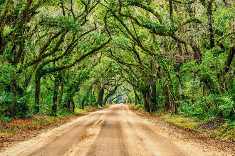 Tunnel des chênes, baie de botanique, la Caroline du Sud photo stock