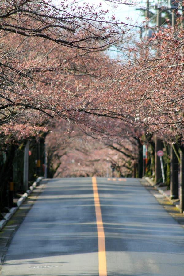 Tunnel des fleurs de cerisier en montagne d'Izu photos libres de droits