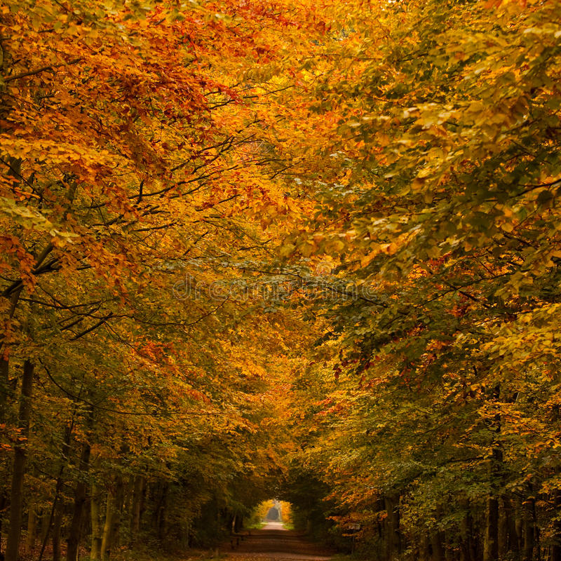 Tunnel di autunno immagine stock libera da diritti