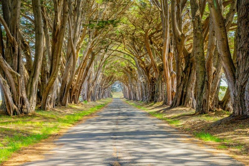 Tunnel di Cypress a punto Reyes immagini stock libere da diritti
