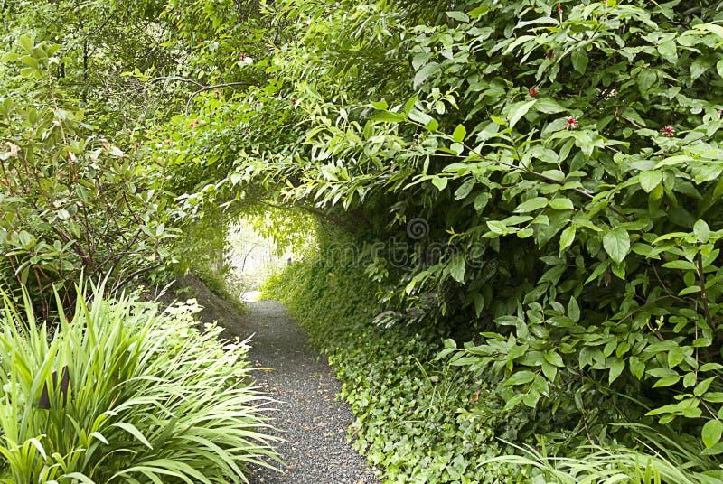 Tunnel die van Gebladerte Weg behandelen royalty-vrije stock afbeelding