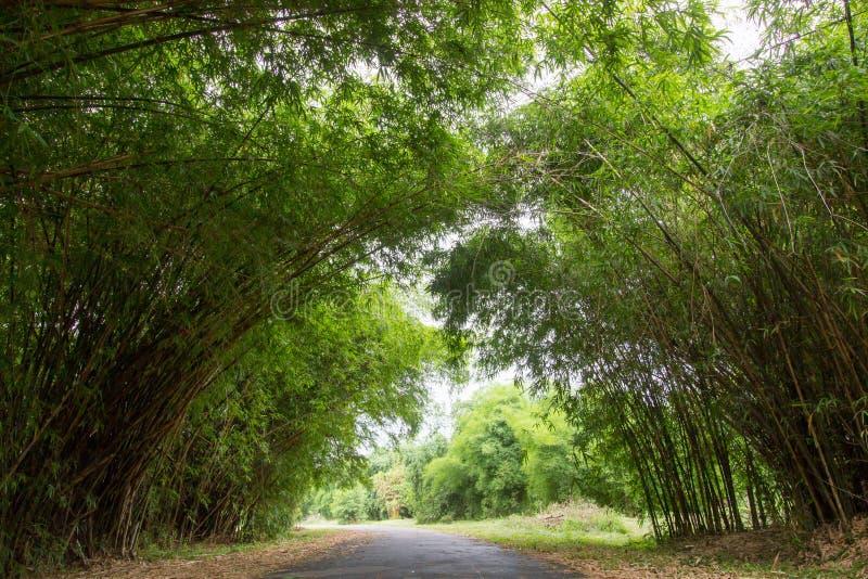 Tunnel en bambou au jardin de Waeruwan en parc de PhutthamonthonBuddhist dans le secteur de Phutthamonthon, province de Nakhon Pa image stock