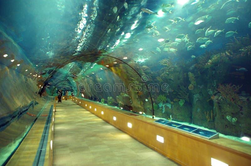 Tunnel en verre sous la mer photographie stock