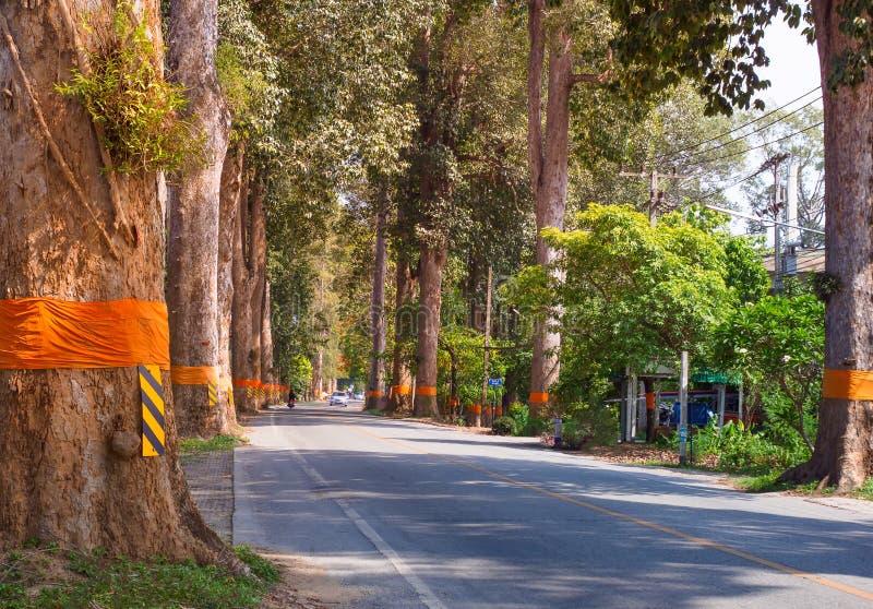 Tunnel för landsväg av gröna träd på solljus med skugga på gatan i den Amphoe Saraphi Chiang Mai staden av Thailand royaltyfria bilder