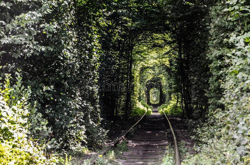 A tunnel of foliage. Beautiful train tree tunnel in the forest called `Tunnel of love royalty free stock photography