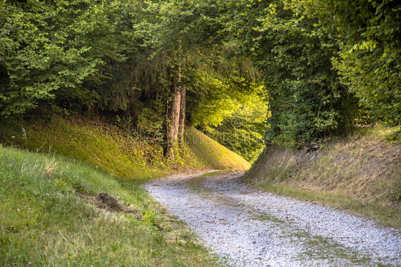 Tunnel of Foliage in unpaved rural road stock photos