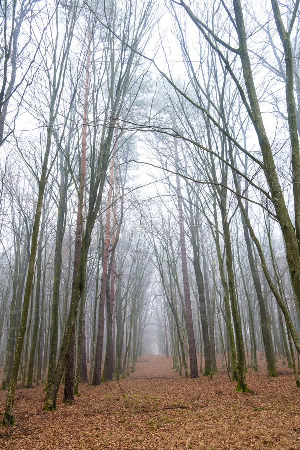 Tunnel in the forest in fog stock images