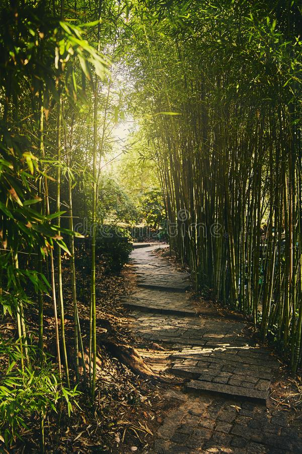 A tunnel of green bamboo branches with soft light at the end. Passage in the park with steps from stone slabs. The sun`s rays mak royalty free stock images