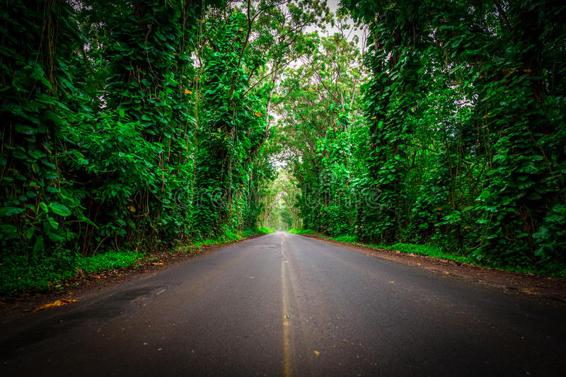 Tunnel of Green. Trees and vegetation line both sides of the roadway. Creating a tunnel feeling as you drive through it. Kauai, Hawaii royalty free stock photos