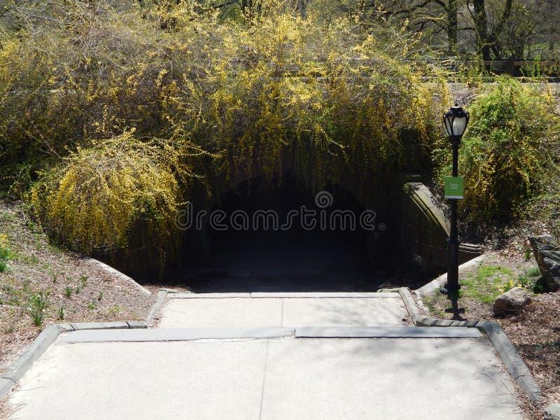 Tunnel i Central Park arkivfoton