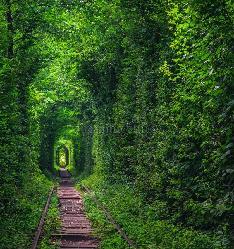 Tunnel of Love near Klevan, Ukraine stock photography