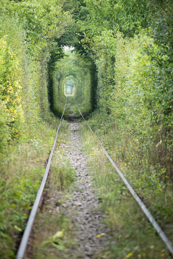 Tunnel of love Romania. Natural tunnel formed by trees near Caransebes, Romania royalty free stock image