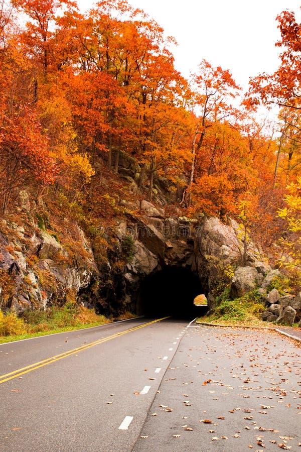 Tunnel met weg en bomen royalty-vrije stock foto