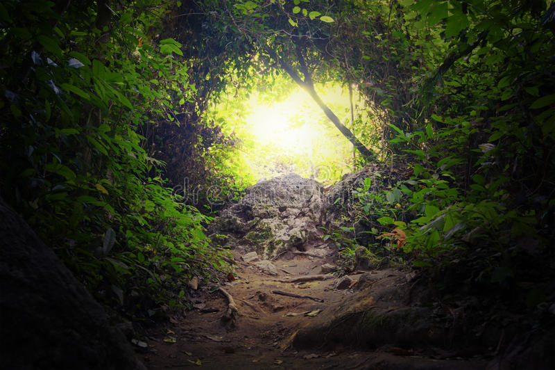 Tunnel naturel dans la forêt tropicale de jungle image libre de droits