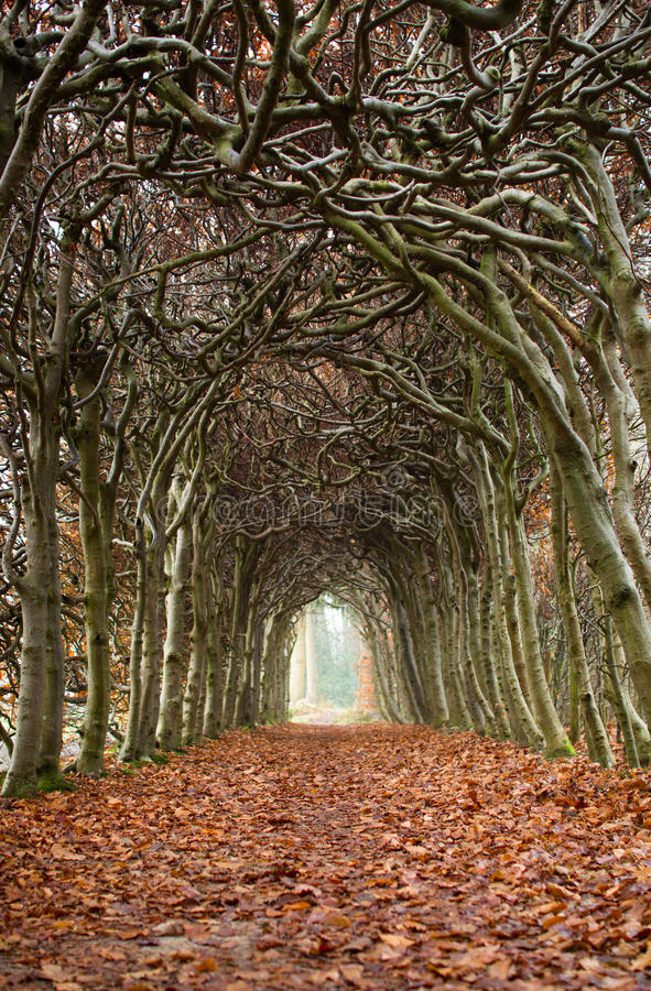 Free Tunnel Of Trees Stock Image - 36584701
