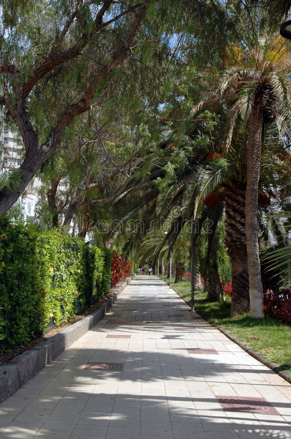 Tunnel of Palm Trees stock photography