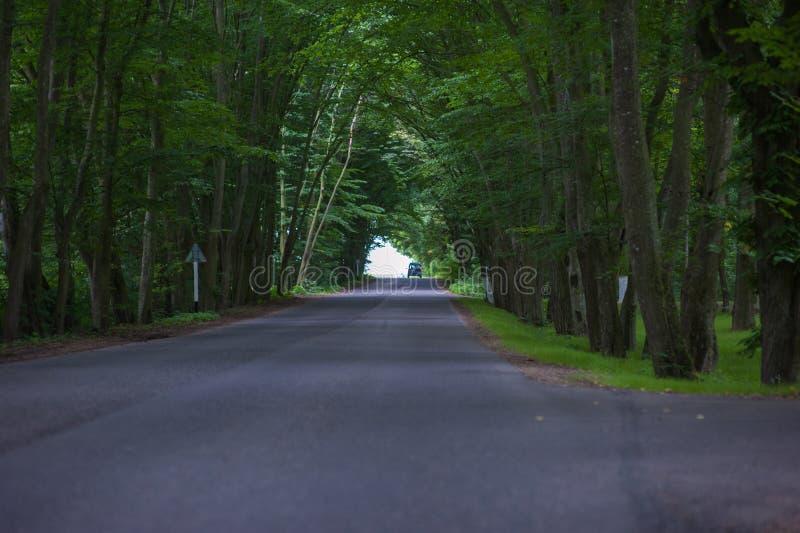 Tunnel spesso della foresta e tramite la strada fotografia stock