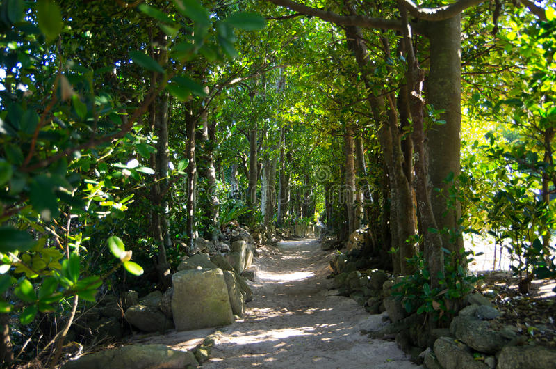 Download Tunnel of the trees stock image. Image of fukugi, colonnade - 23550005