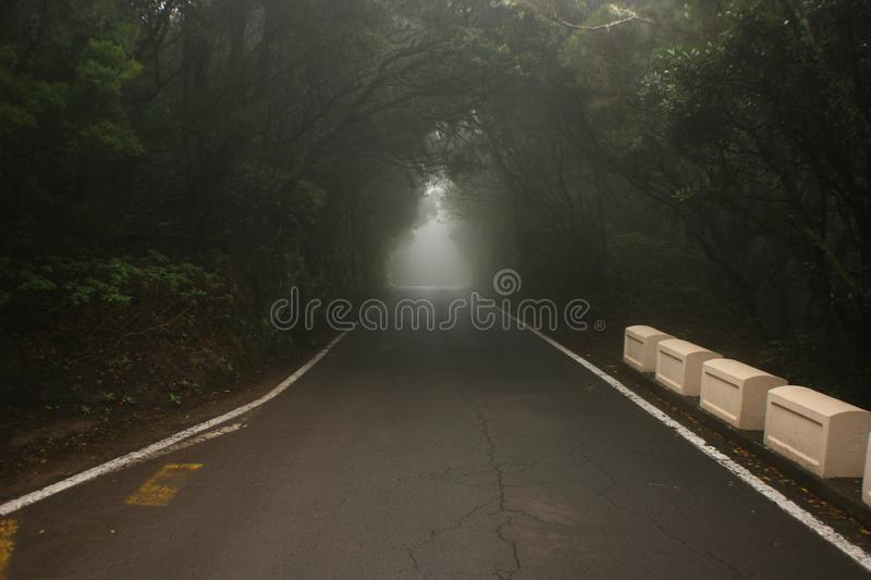 Tunnel of trees in dark forest stock images