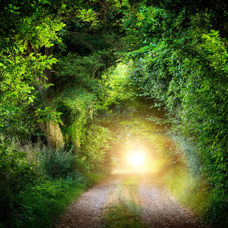 Tunnel of trees leading to light. Fantasy landscape with a green tunnel of illuminated trees on a forest path leading to a mysterious light. Brightly lit outdoor royalty free stock image