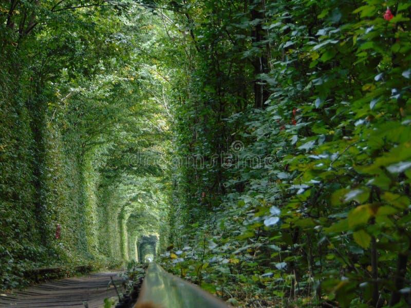 Tunnel van liefde royalty-vrije stock fotografie