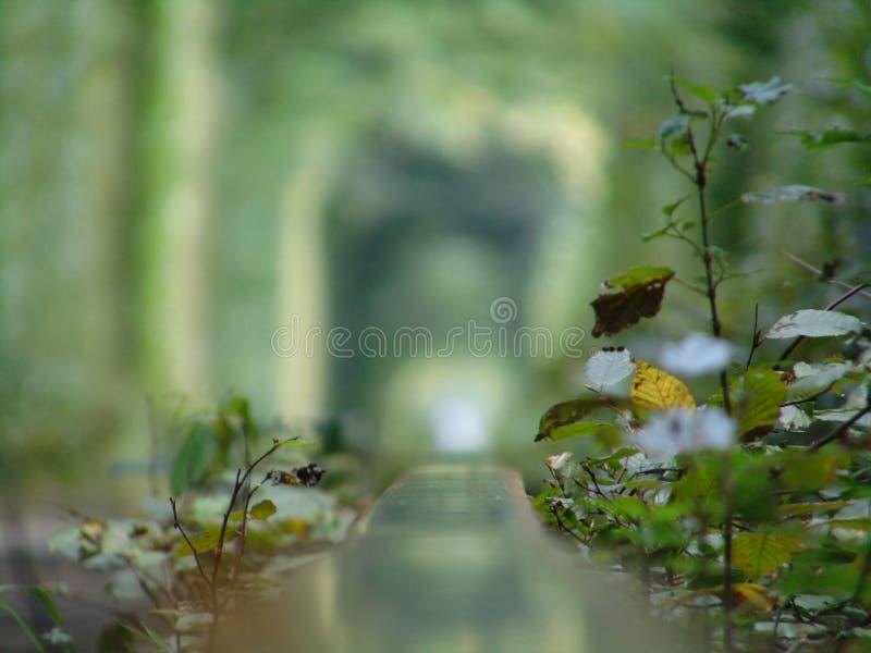 Tunnel van liefde stock afbeelding