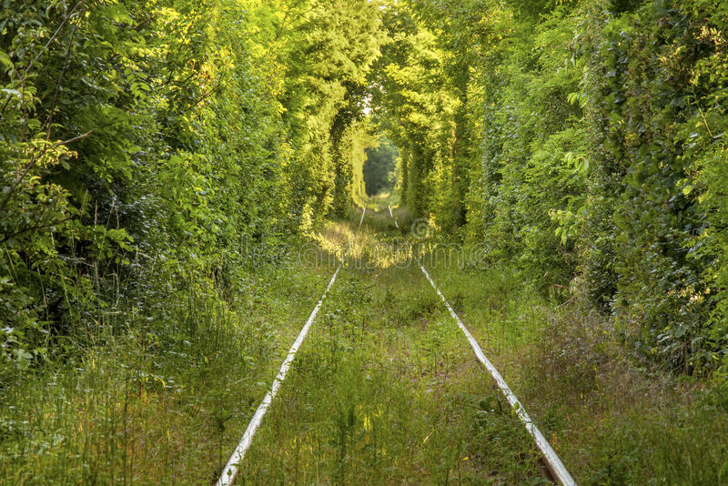 Tunnel van liefde royalty-vrije stock foto's
