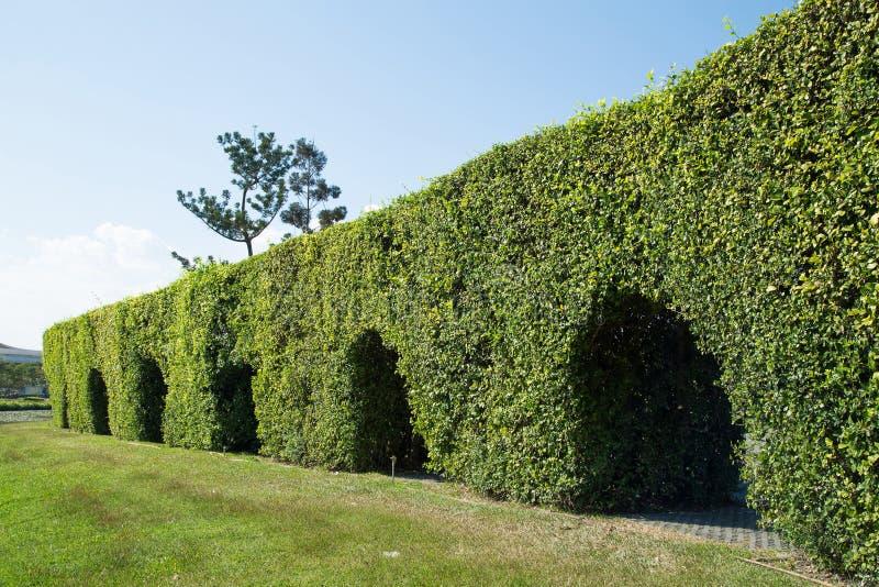Tunnelboom in het park stock foto's